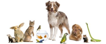 Haustier, Tierarzt Goldfisch, Reptilie Pflege