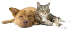 Klinische Untersuchung Haustier, Ultraschall Tierarzt, Diagnose Kleintier