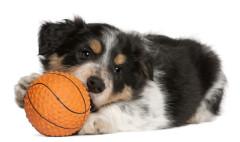 Tierarztpraxis Behandlung, kleiner Hund, Heimtierausweis
