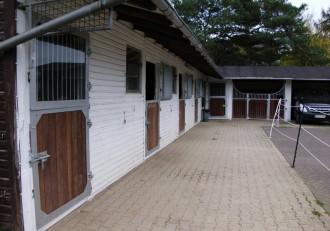 Aufnahme Pferd, Erste Hilfe Tierarzt, Pferdepraxis